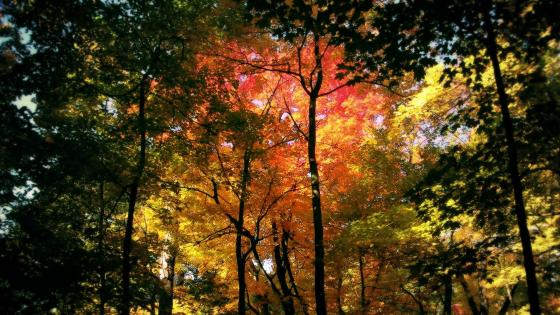Fall forest scenery wallpaper
