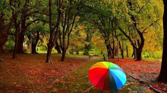 Colorful umbrella wallpaper