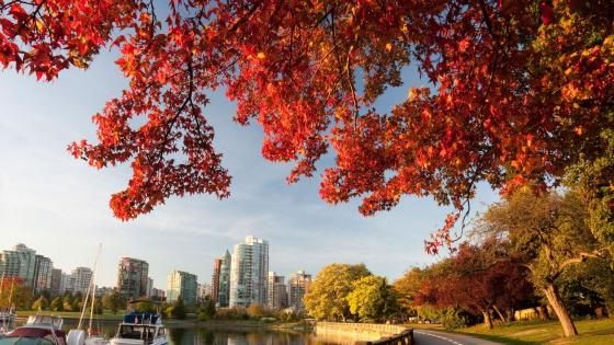 Vancouver at fall wallpaper