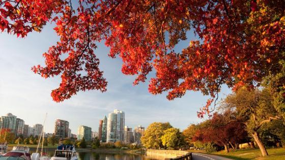 Vancouver at fall wallpaper