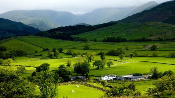 Green landscape wallpaper