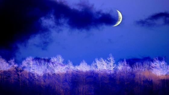 Winter night crescent wallpaper