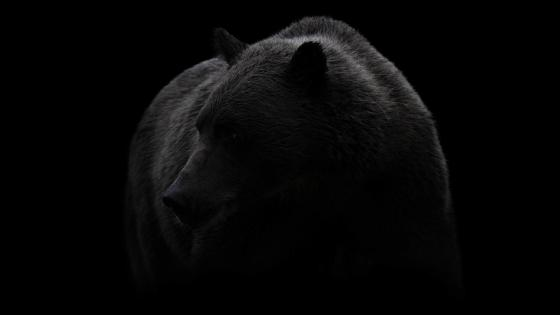 Brown Bear in shadow wallpaper