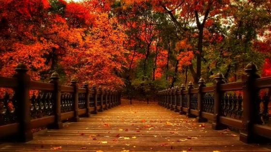 Bank Rock Bay at fall (Central Park, NY) wallpaper