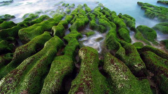 Laomei Green Reef wallpaper
