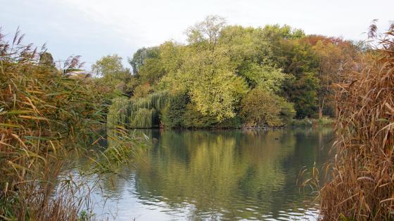 Witringen in autumn wallpaper