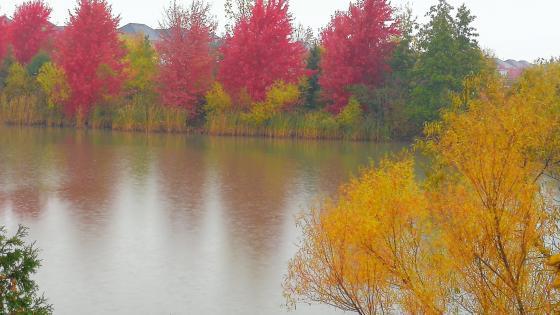 Late fall in the rain wallpaper