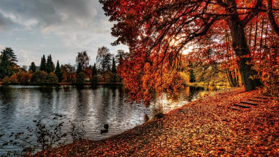 Reddish autumn wallpaper