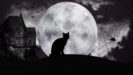 Black cat silhouette in the full moon wallpaper