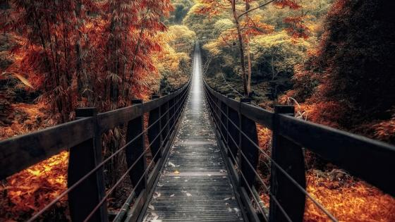Footbridge in the fall forest wallpaper