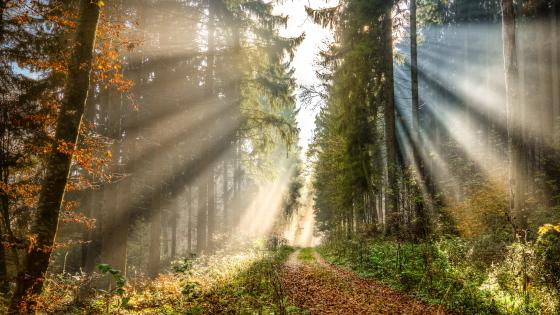 Rays of the sun in the fall forest wallpaper