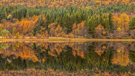Autumn landscape reflection🍂 wallpaper