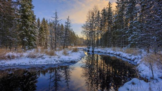 River in the snowy forest wallpaper