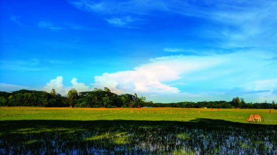 Countryside in Bangladesh wallpaper