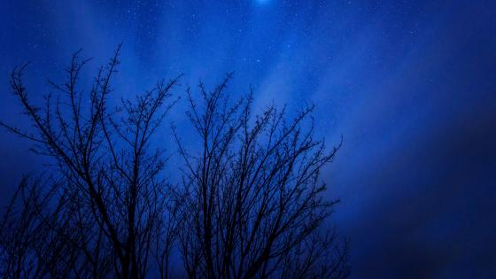 Night sky above the trees wallpaper