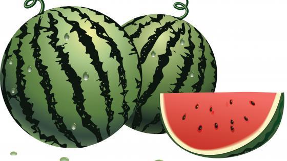 Watermelon illustration wallpaper