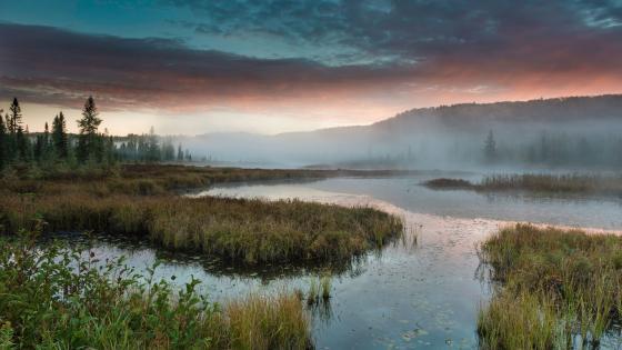 Misty freshwater marsh at dawn wallpaper