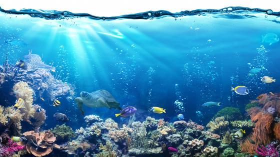 Ocean scene wallpaper