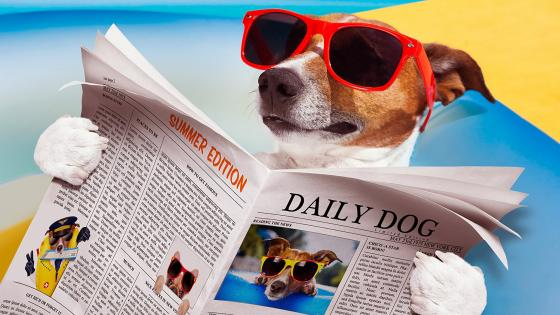 Daily Dog wallpaper