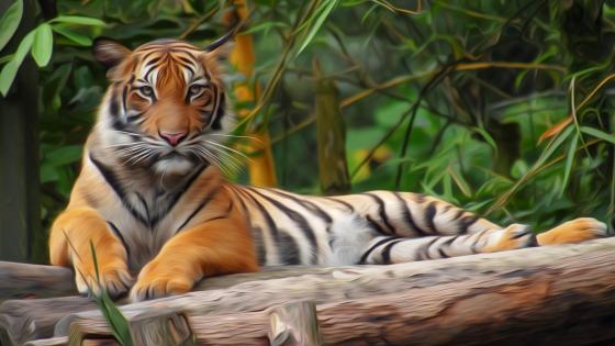 Tiger painting filter photo effect wallpaper