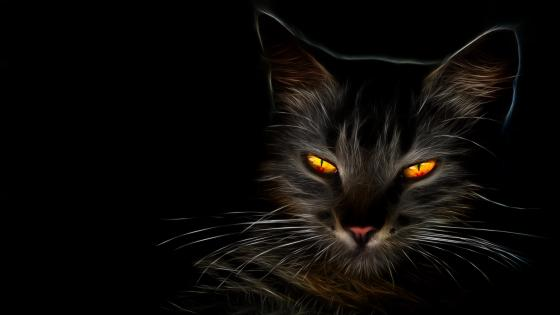 Glowing cat eyes wallpaper
