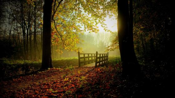Footbridge in the autumn forest wallpaper
