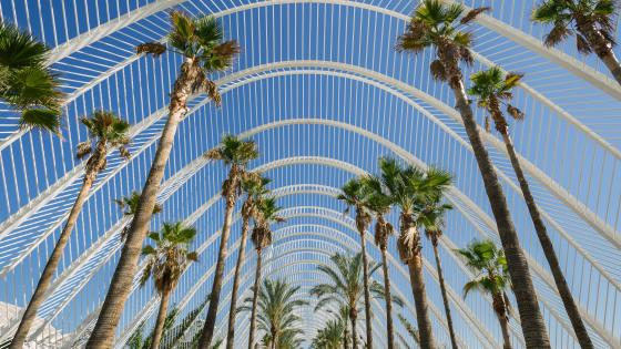 Palm Trees in Valencia wallpaper