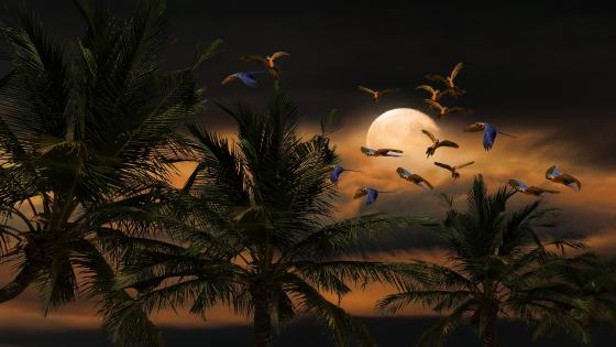 Parrots in the moonlight wallpaper