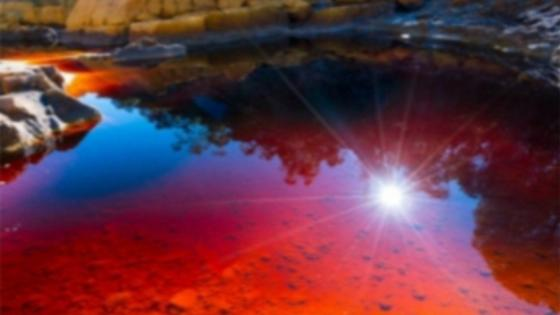 Sun in the Red Pond wallpaper