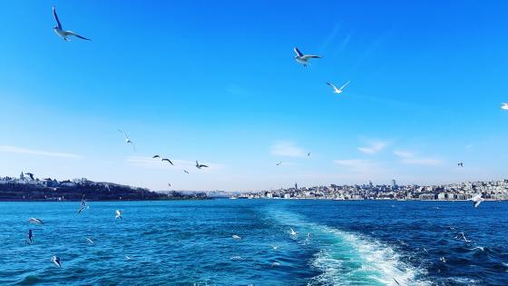 Blue sky with seagulls wallpaper