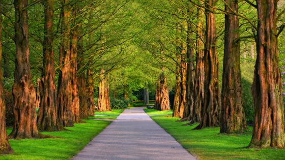 Green tree lane wallpaper