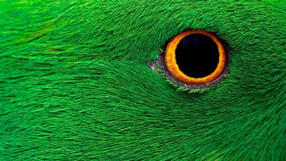 Bird eye wallpaper