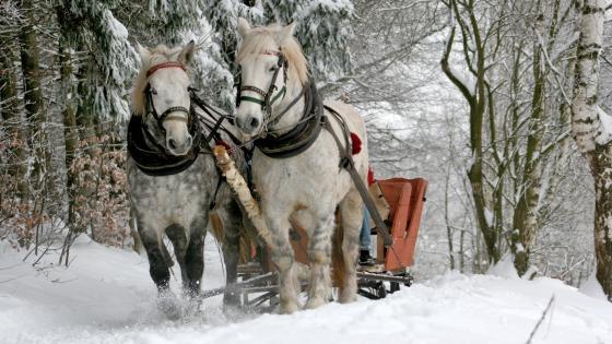 Horse drawn sleigh wallpaper