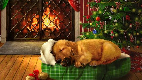 Puppy sleeping in front of fireplace wallpaper