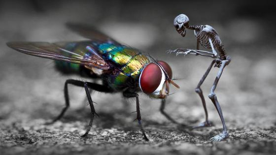 Fly and a skeleton encounter wallpaper