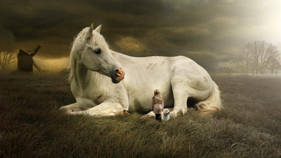 Little girl and a white horse wallpaper