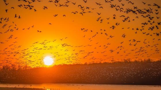 Birds in the orange sunset wallpaper