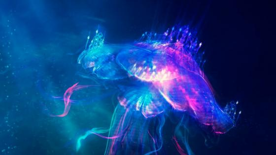 Illuminating Jellyfish wallpaper
