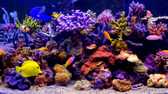Coral reef fish aquarium wallpaper