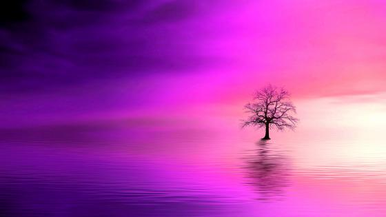 Solitary tree reflected in water wallpaper