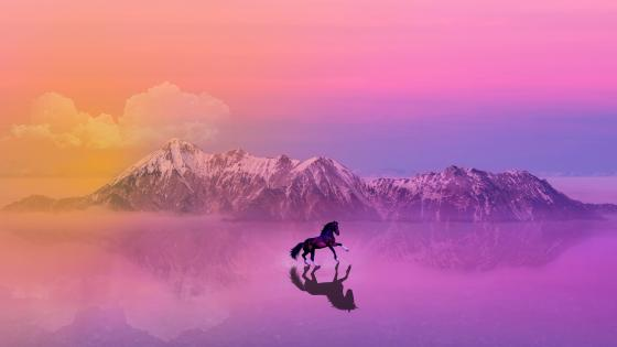 Horse walks on water wallpaper