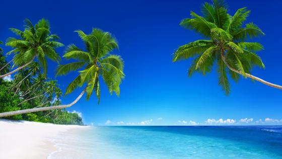 White sandy tropical beach with palms wallpaper