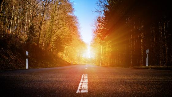 Road in the rays of light wallpaper