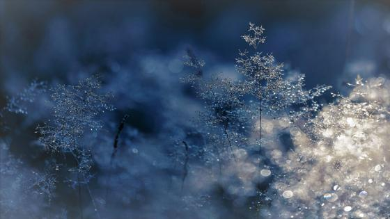 Winter cold wallpaper