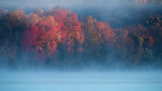 Hazy autumn landscape wallpaper