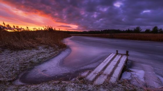 Frozen wetland wallpaper