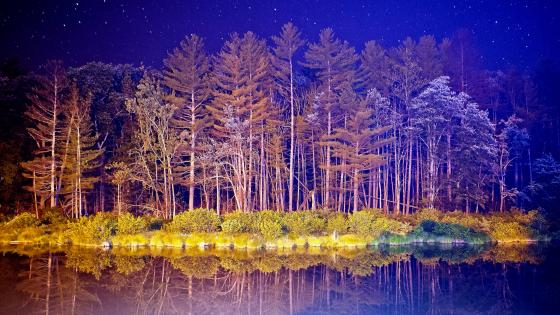 Hoary forest under the starry night wallpaper