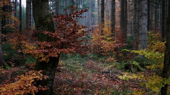 Autumn forest 🍂 wallpaper