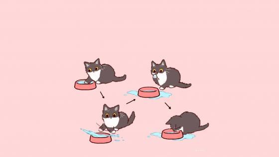 Funny cats wallpaper