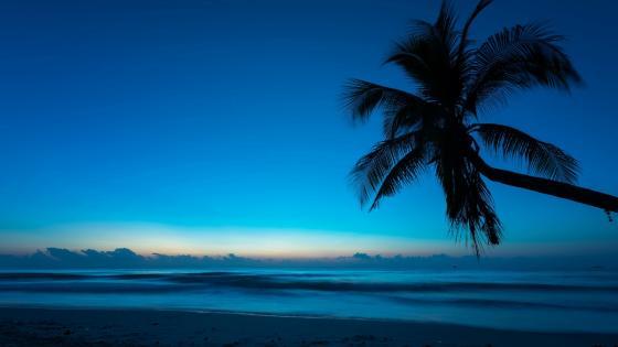 Palm silhouette wallpaper